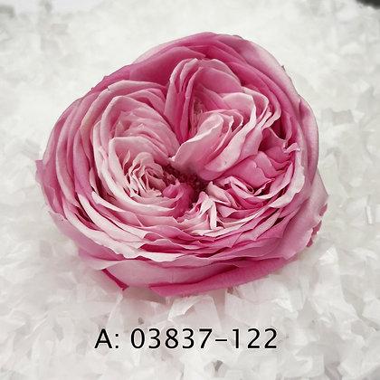 """Роза """"Temari Blossom"""", А: 122 , 6 бутонов"""