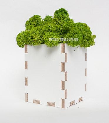 Экосувениры со мхом
