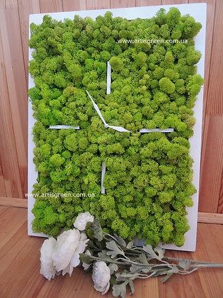 Square moss