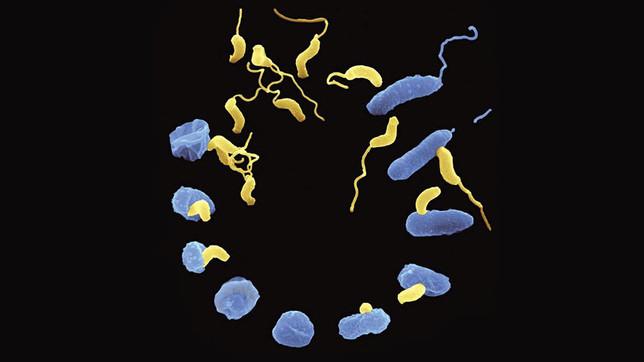 Biotech Patent News: Antibióticos vivos e o uso de bactérias para matar bactérias