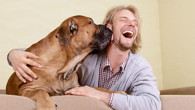 Biotech Patent News: Genes para cachorros amigáveis