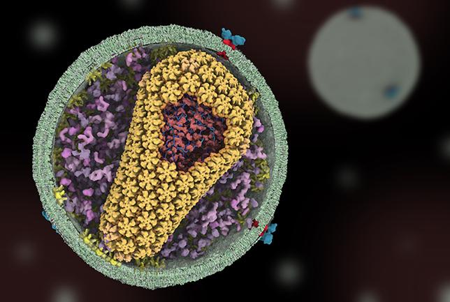 Biotech Patent News: Identificado composto vegetal com potente ação contra o vírus HIV