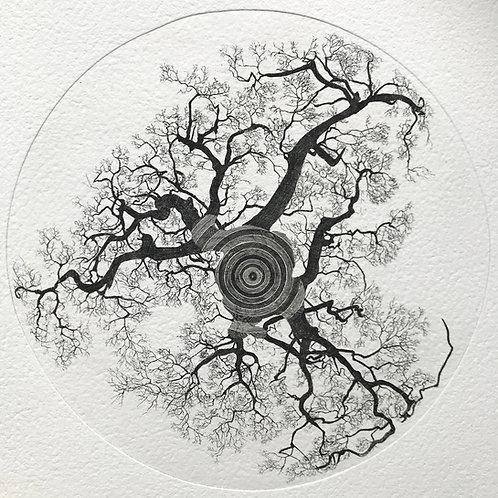 Chêne de Nerthe concentrique
