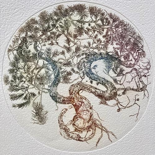 Pinus species thobii
