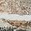 Thumbnail: Cuenca Evolucion