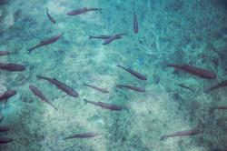 Рыба Плавание