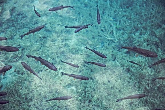 Dode vissen op visvijver aan de Katteberg in Bilzen