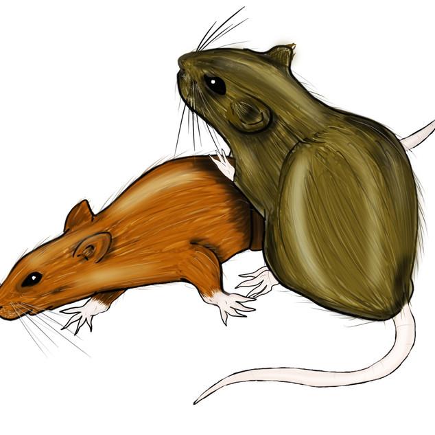 Rats%201_edited.jpg