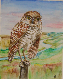Burrowing+Owl.JPG
