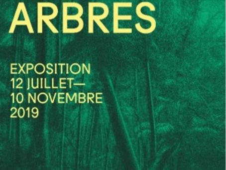 NOUS LES ARBRES L'EXPOSITION DE LA FONDATION CARTIER