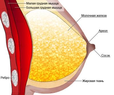 Как сохранить грудь. Ctrl+S