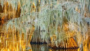 Cypress Glow.jpeg