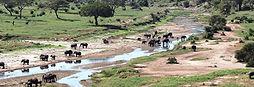 tarangire-national-park-elephants-in-riv