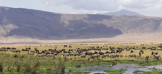 ngorongoro-crater-06.jpg