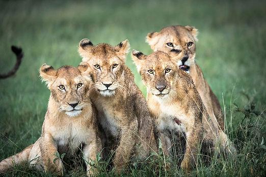 lion-family-portrait-serengeti.jpg