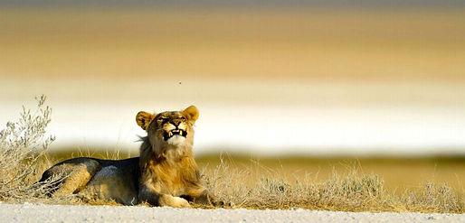 african-photography-safari-2a.jpg