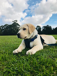 training while you work puppy socialisation home visits faster results dog training or busy people get result fast fix problems while you work train your best dog easy relax professional training fast results