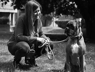 Education canine positive