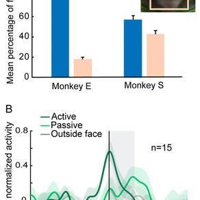 Neural regulation of social gaze