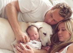 Como preparar o seu cão para a chegada do bebé