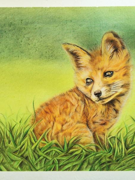 Finn the little fox cub