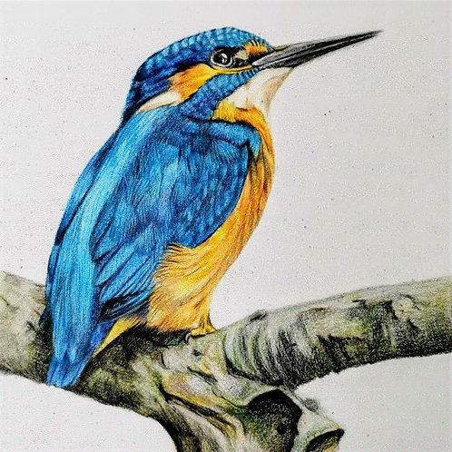 Kingfisher prints