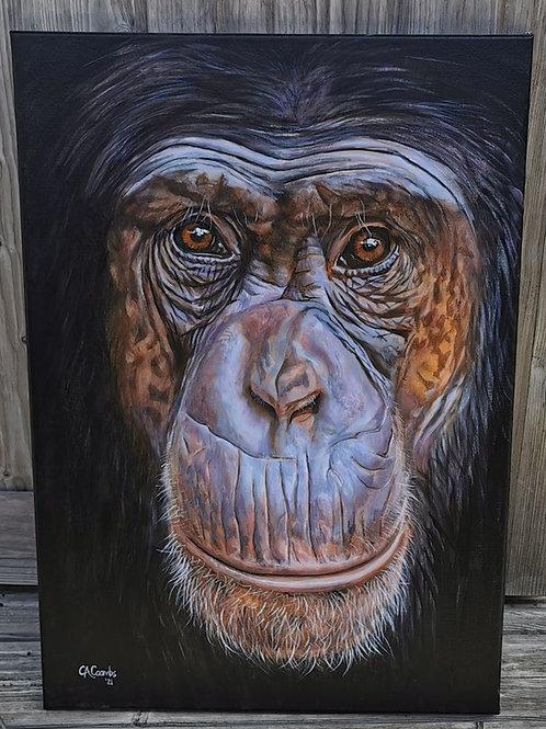 Charlie chimp