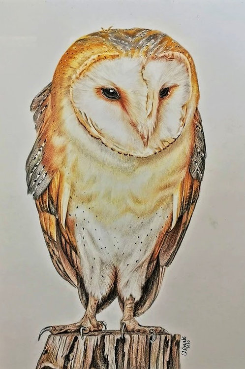 Ollie the owl -ORIGINAL DRAWING
