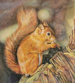 Red Squirrel - from a photo by Angela Hill