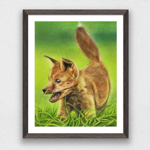 Freddie the fox cub