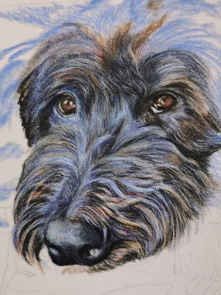 Mia, the blue dog.