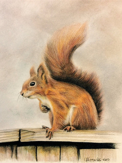 Original drawing of this beautiful red squirrel
