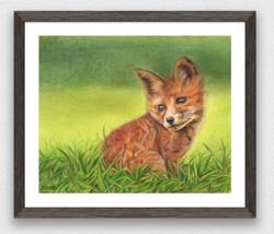 Finn the foxcub
