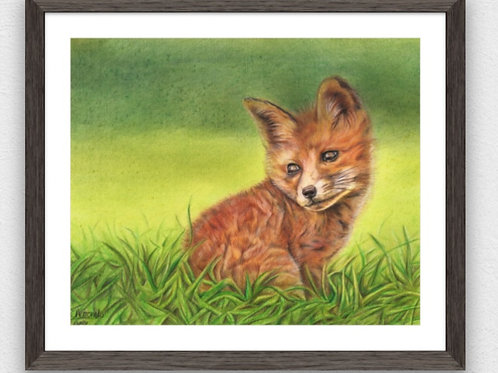 Finn the fox cub