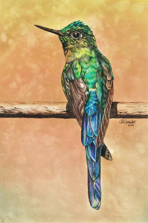 Hummingbird - ORIGINAL DRAWING
