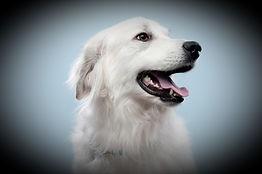 Dog's%20Portrait_edited.jpg