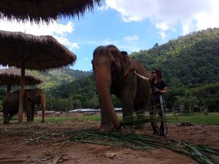 Mi experiencia de voluntariado en Tailandia