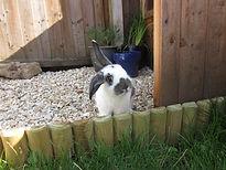 rabbit vet north walsham norwich norfolk