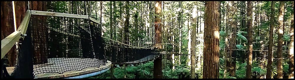 Redwood Tree Walk Rotorua New Zealand