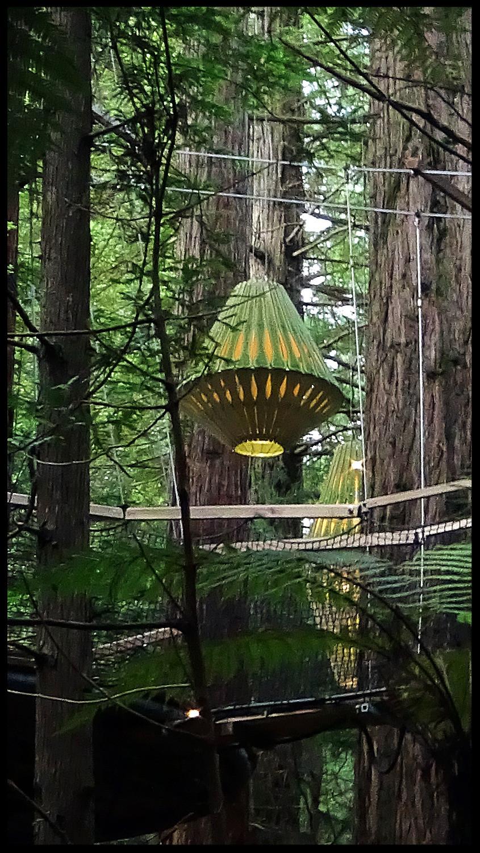 Lanterns designed by David Trubridge - Redwood Night Walk Rotorua New Zealand