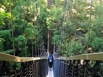 Redwood Tree Walk - Rotorua