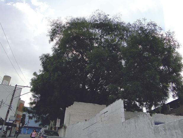 3. Rua Miguel Hackmey, 2011. Elton Soare