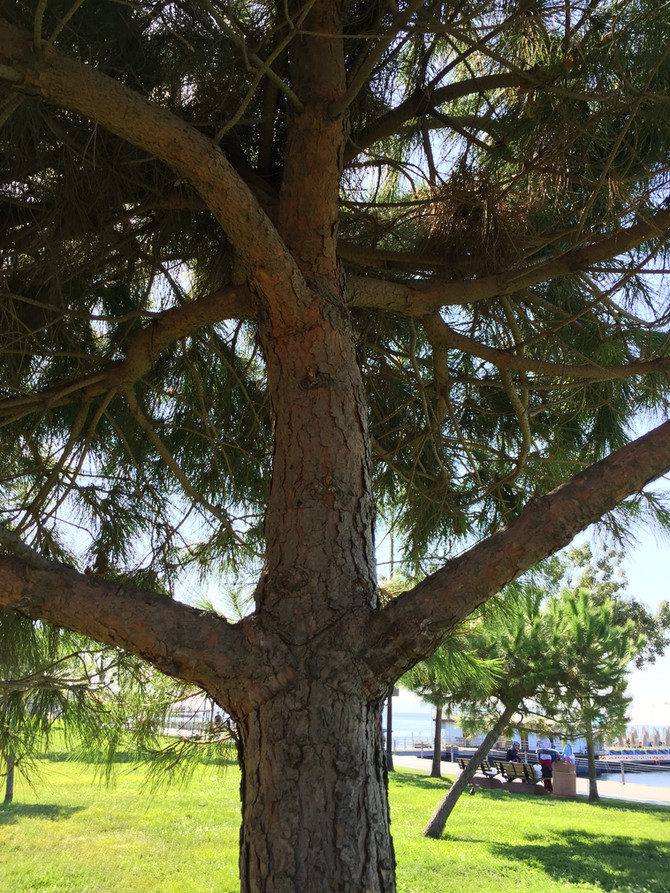 Да прегърнем дърво