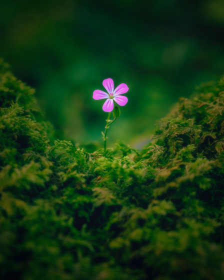 Ensom Blomst