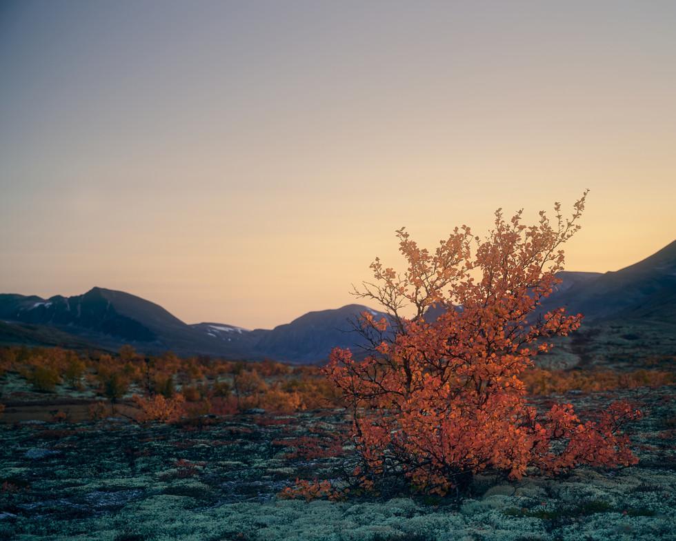 Høst i Rondane