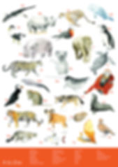 A to Zoo Poster.jpg