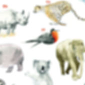 A to Zoo crop.jpg