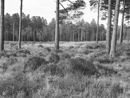 Ancient Woodland....