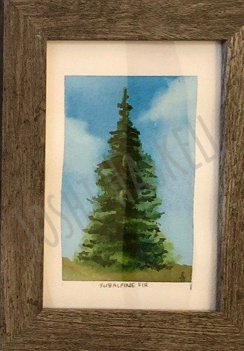 Evergreens of the Wasatch