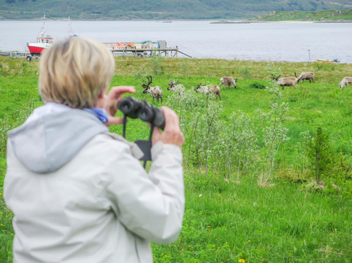 Watching reindeering on a fjord tour in Tromsø. Tour guided by The Green Adventure.